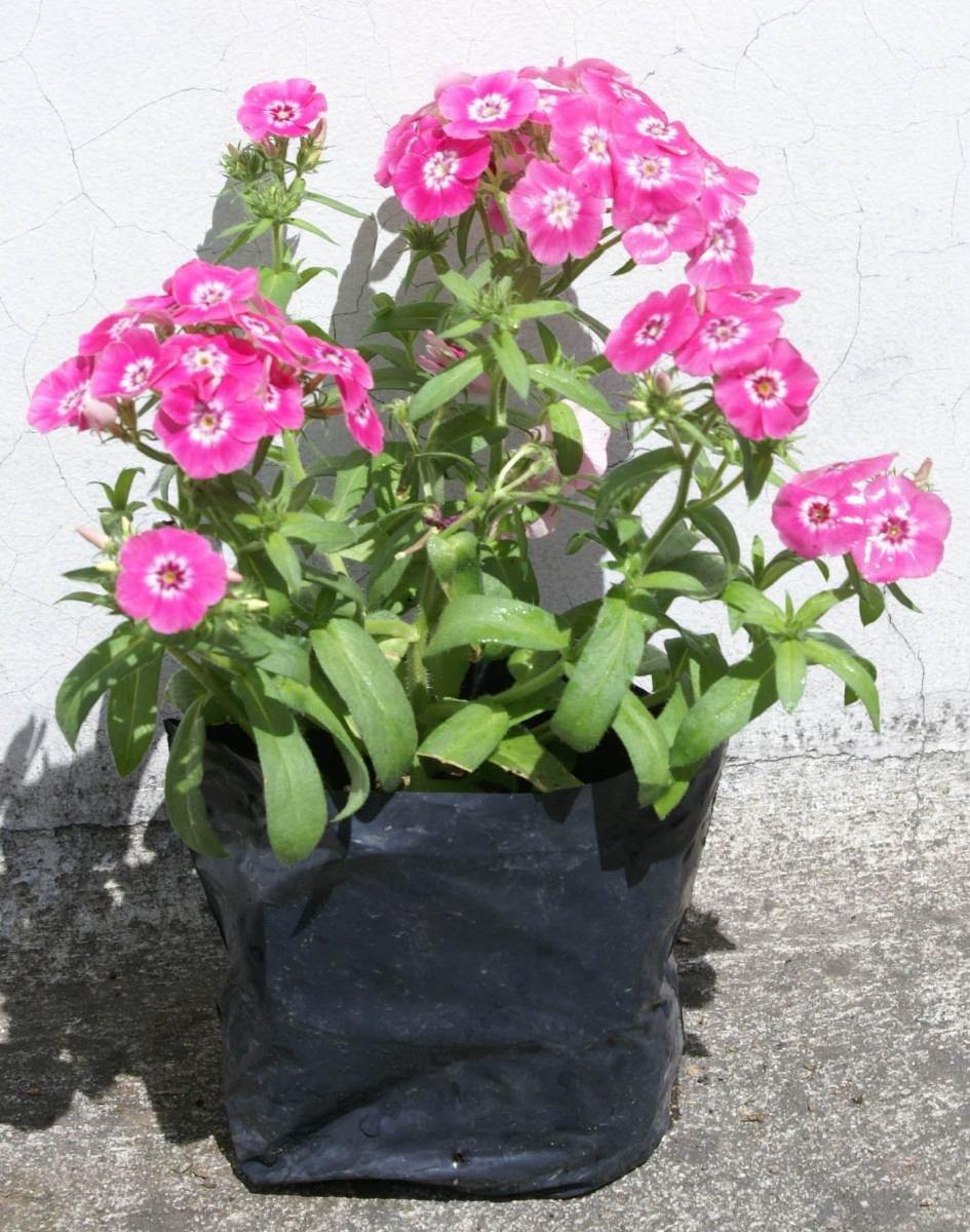 Lote 4 plantas bellitas ornamentales decoracion de patios for Plantas decorativas ornamentales